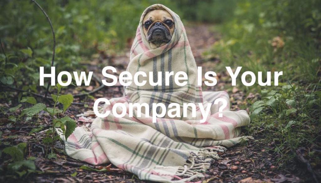 cute-dog-in-blanket_925x